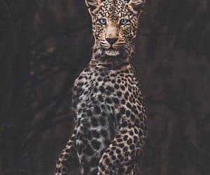 animal, animals, and cool image