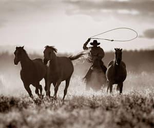 horse and cowboy image