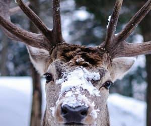 animals, winter, and snow image