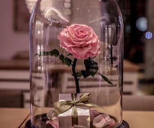 beautiful, roses, and Valentine's Day image
