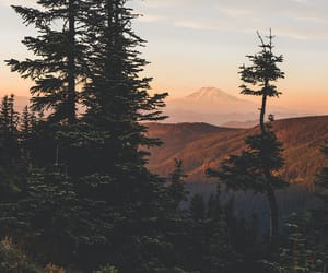 tree, nature, and mountains image
