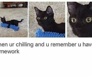 cat, fuck it, and hilarious image