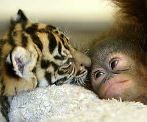 animals and cuties image