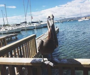 birds, boats, and life image
