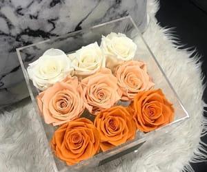 rose, flowers, and orange image