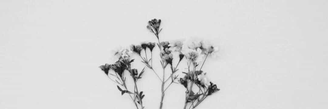 black and white, flowers, and header image