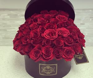 flowers, gift, and rose image