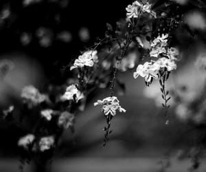 black and flowers image