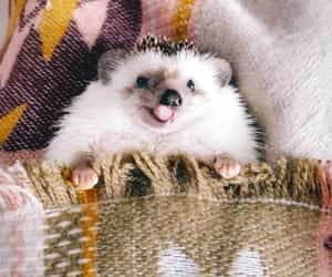 autumn, hedgehog, and cute image