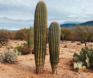 cacto, day, and desert image