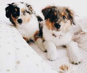 aesthetic and cute dog image