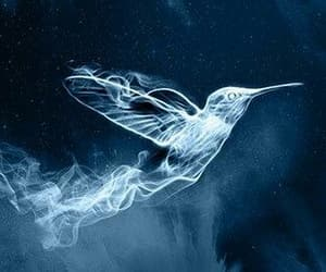 book, harry potter, and hummingbird image