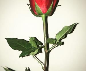 depressed, flowers, and happy image