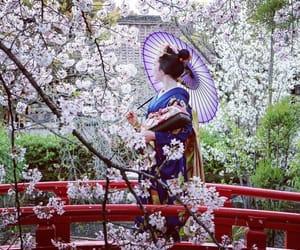 cherry blossom, kimono, and geiko image