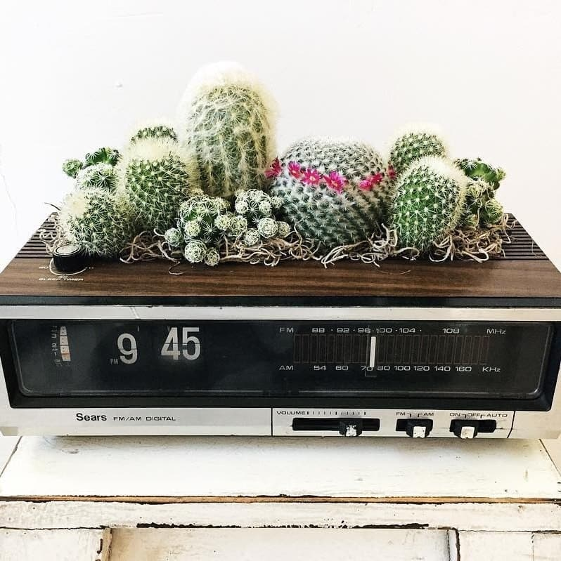cactus, plant, and player image