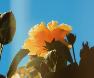 day, flor, and flower image