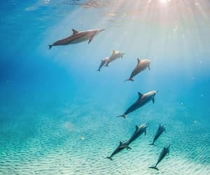 blue, dolphin, and explore image