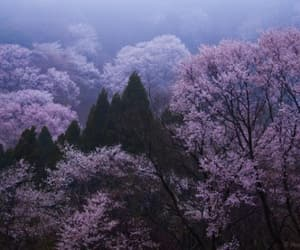 nature, forest, and purple image