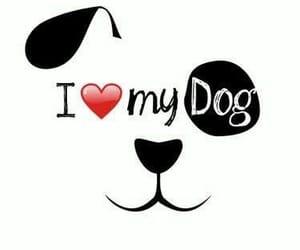 amor, dog, and bff image