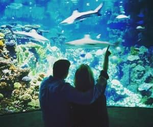 adorable, aesthetic, and aquarium image