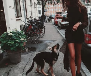 girl, dog, and explore image