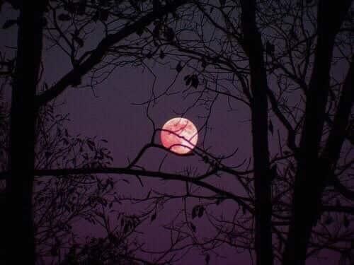 moon, night, and purple image