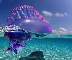 amazing, animal, and jelly fish image