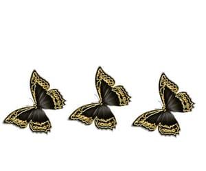 background, beautiful, and borboleta image