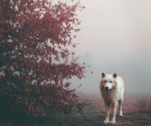 animals, wolf, and amazing image