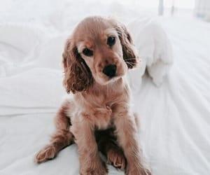 animal, animals, and pet image