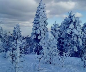 czech republic, nature, and snow image