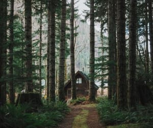 cabin, forest, and wanderlust image
