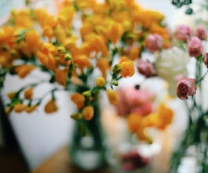 flower, spring, and flowers image
