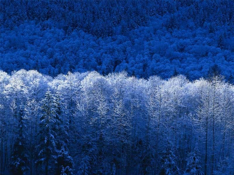 winter, blue, and tree image