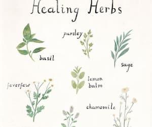 herbs, green, and healing image
