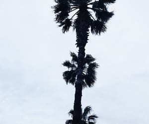 palm, sky, and thepalm image
