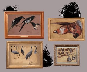 animal, birds, and cats image