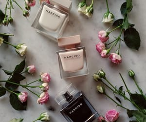 beauty, cool, and narciso rodriguez image