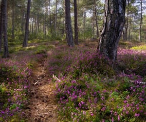 enchanted forest, forest, and heath image