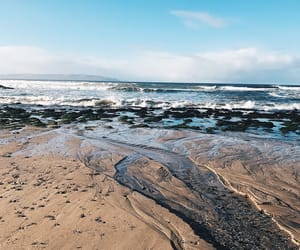 beach, life, and ocean image