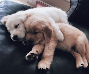 cuteness, dog, and doggy image