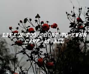 aesthetic, Lyrics, and young the giant image