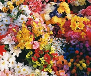 colourful, colours, and flowers image