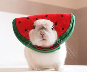 adorable, watermelon, and animals image