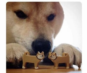 dog, lol, and funny image