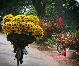 bicycle, flowers, and sunflower image
