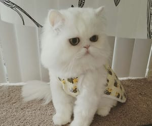 cat, cats, and cuuute image