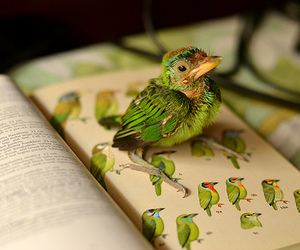bird, book, and quote image