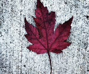 autumn, aesthetic, and alternative image