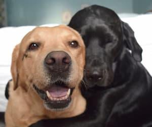 black, brown, and caramel image